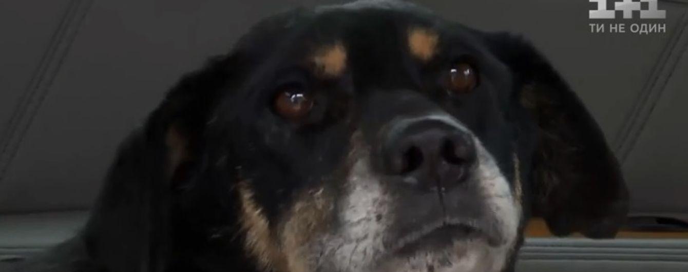 В Одеській області з залізничних рейок врятували виснаженого та побитого собаку