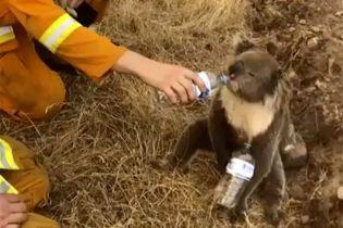 Экологи заявили о миллиарде погибших в огне животных в Австралии