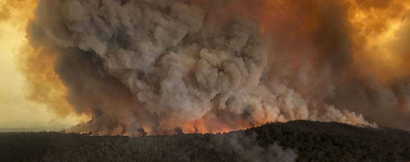 Австралийские ученые назвали вероятное количество погибших животных в результате масштабных пожаров