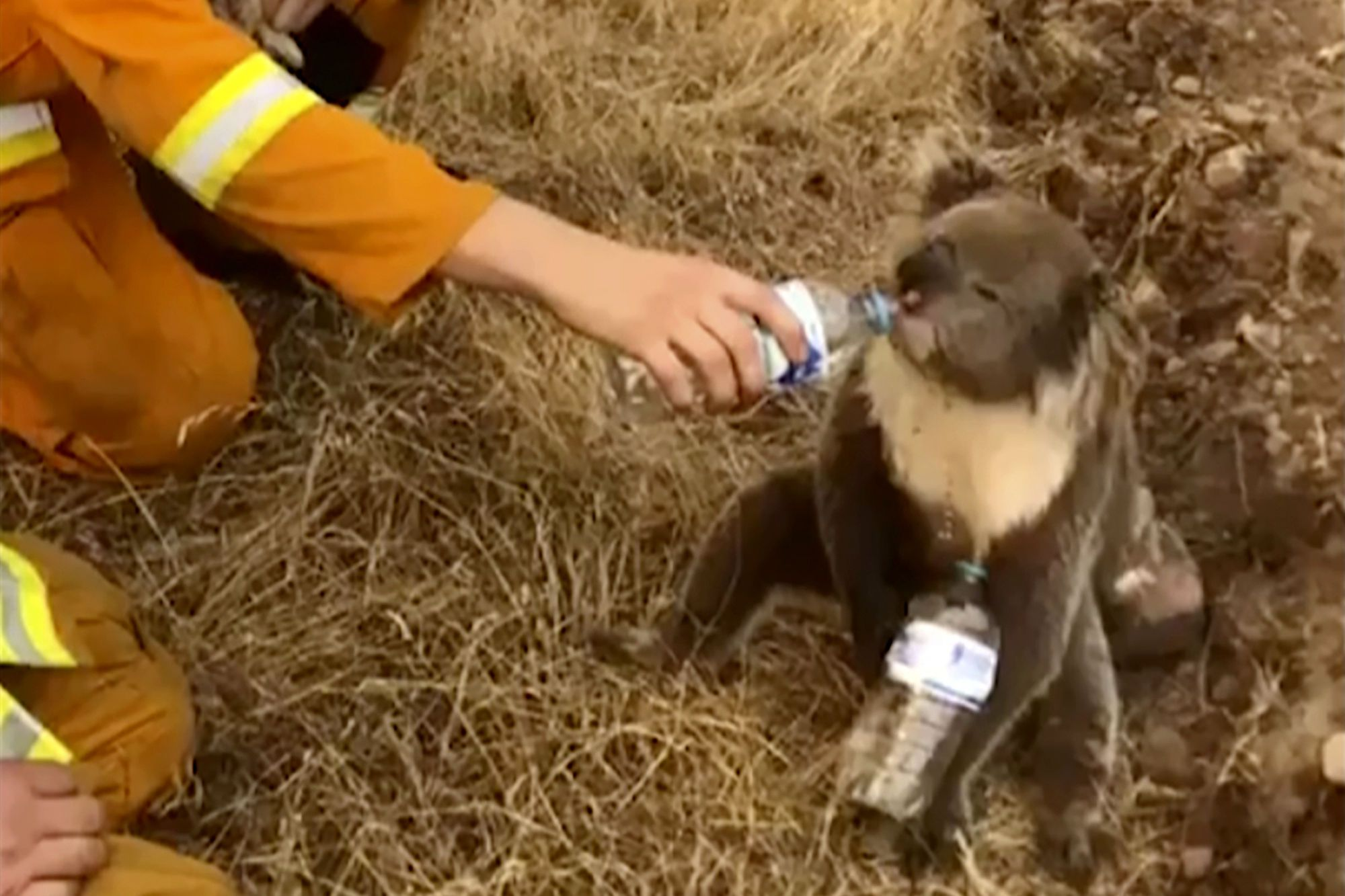 тварини австралія