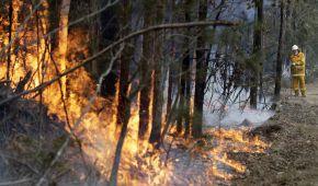 Масштабы из космоса и уничтоженные пейзажи: как распространяется огненное бедствие Австралии в фото до и после