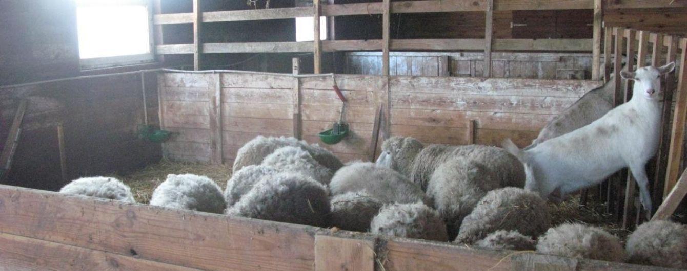 Колишні співробітники мінізоопарку під Києвом розповіли, що стало причиною банкрутства та як рятують тварин від голодної смерті