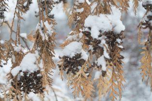 Днем мороз, гололед и снег: погода на вторник