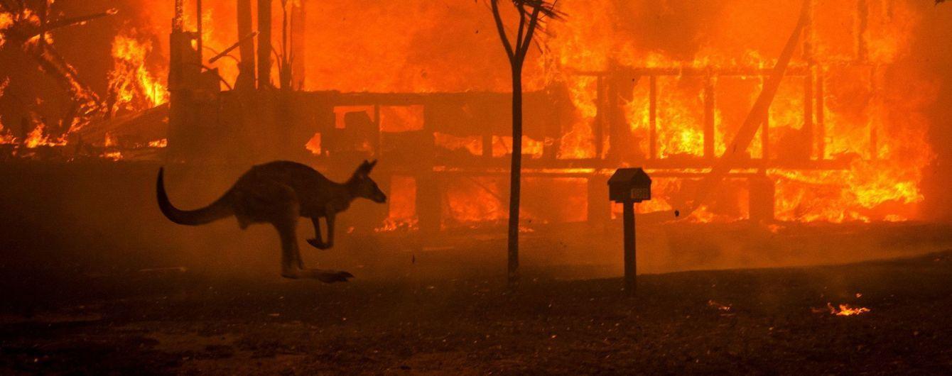 В Австралии во время масштабных пожаров пострадало более трех миллиардов животных