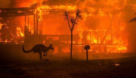 Як люди рятують постраждалих від пожеж в Австралії тварин