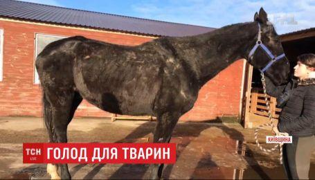 Десятки тварин потерпають без їжі у відпочинковому комплексі, який зачинили через банкрутство