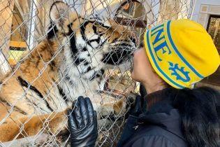 Брошенным под Киевом тиграм нашли новые дома