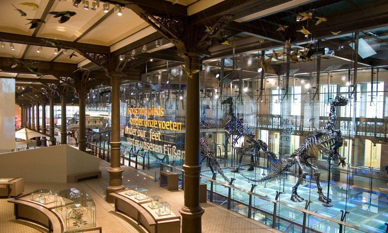 Музей природничих наук, Брюссель.