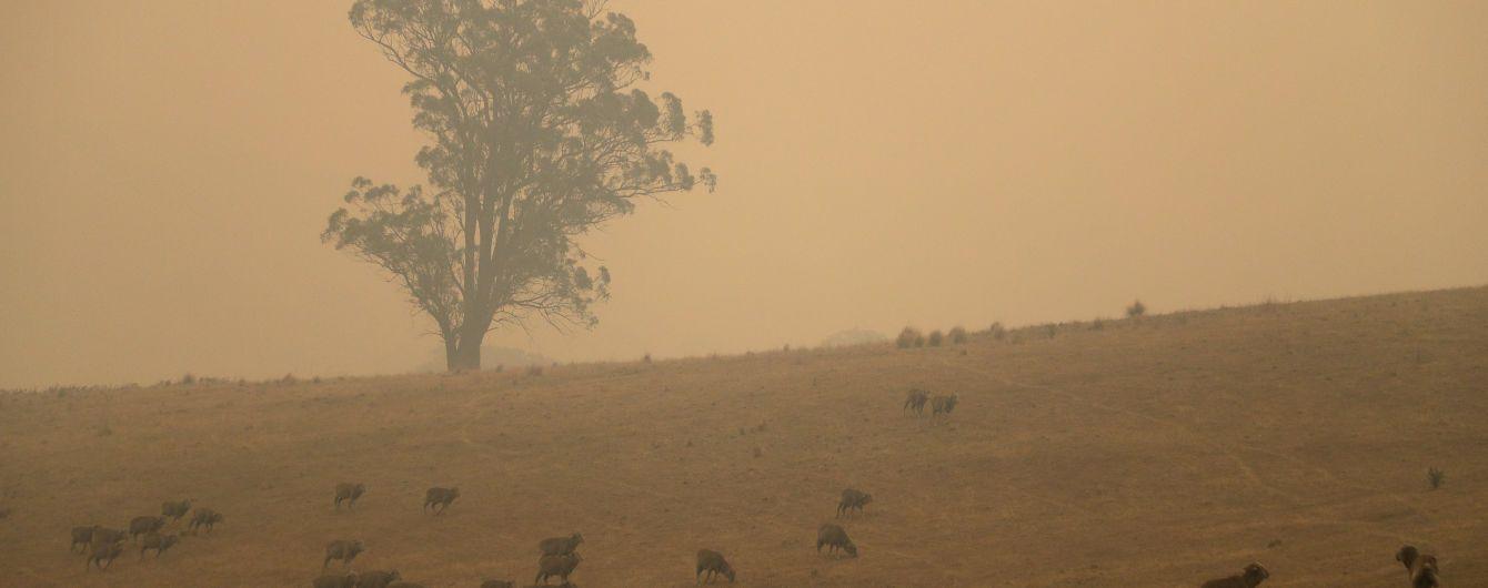 Причини катастрофічних пожеж в Австралії буде розслідувати королівська комісія - прем'єр