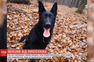 Злякався феєрверку та втік із дому: на Київщині родина від вечора 31 грудня шукає свого собаку