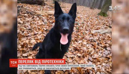 Испугался фейерверка и сбежал из дома: на Киевщине семья от вечера 31 декабря ищет свою собаку