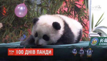 В китайском зоопарке отпраздновали 100 дней от рождения детеныша панды