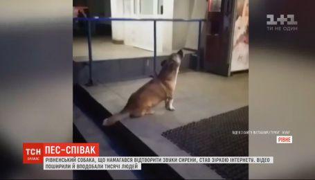 Рівненський собака став зіркою Мережі: чотирилапий співак вив під супермаркетом