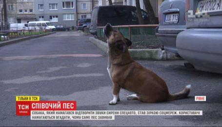 У Рівному собака став зіркою інтернету, коли намагався відтворити звуки сирени спецавто
