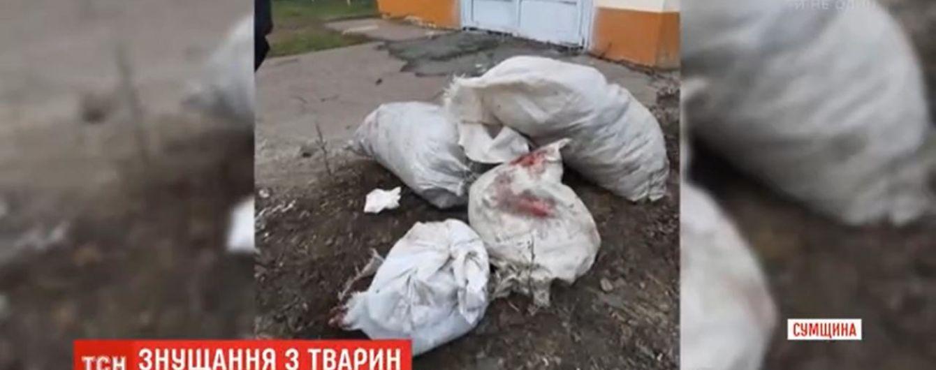 В Шостке нашли несколько мешков и пакетов с убитыми котами и собаками