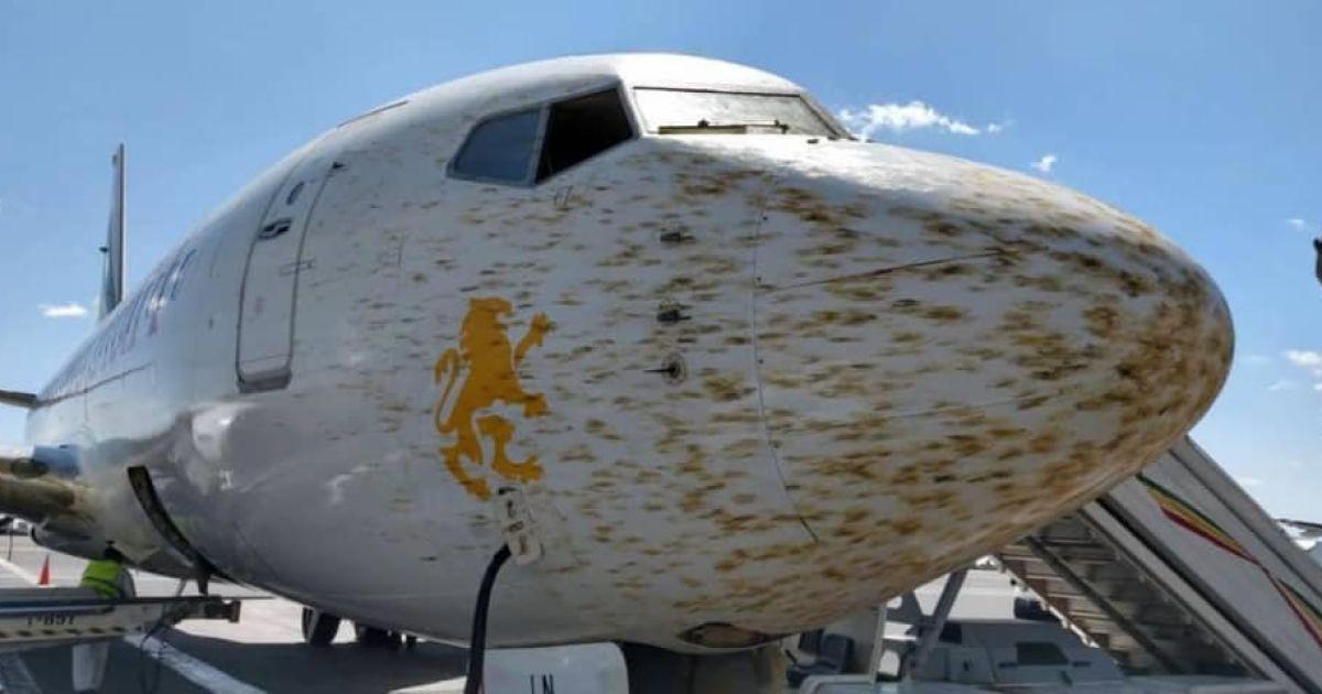 В Эфиопии пилоты не смогли посадить самолет из-за стаи саранчи