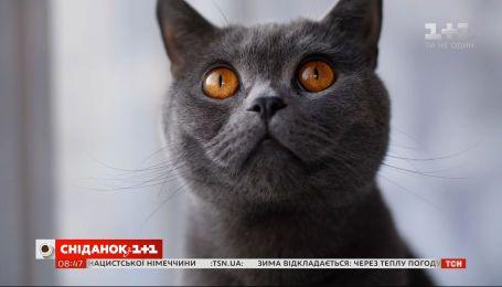 Як кіт-безхатько змінив життя важкохворого хлопця та став йому вірним другом