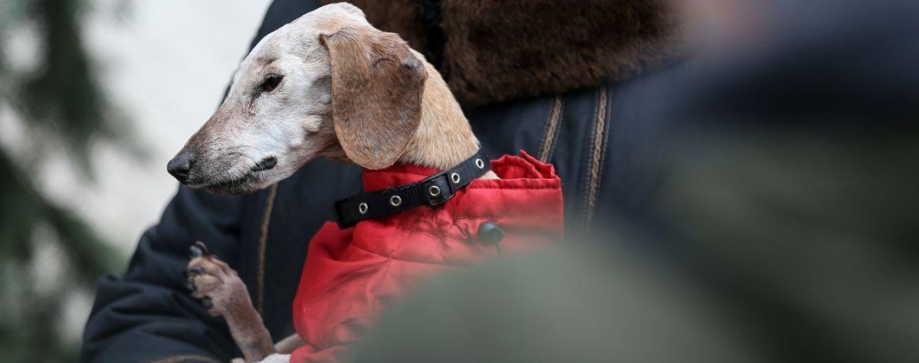 В Киеве зарегистрировали рекорд продолжительности жизни старейшего собаки в Украине: ею стала такса Нора