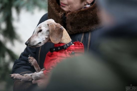 У Києві зареєстрували рекорд тривалості життя найстарішого собаки в Україні: нею стала такса Нора