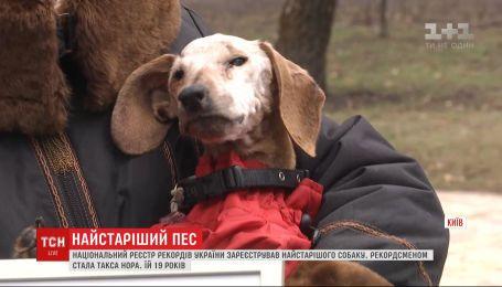 """Ей 19, и она """"пенсионерка"""": ТСН нашла самого старого пса в Украине"""
