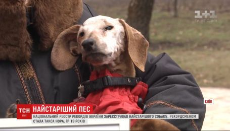 """Їй 19, і вона """"пенсіонерка"""": ТСН віднайшла найстарішого пса в Україні"""