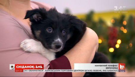 Ласковые щенки ищут дом