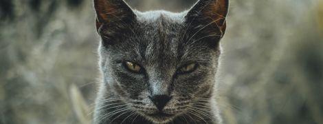 Безжалостные и ненасытные убийцы: в усилении бедствий охваченной огнем Австралии обвинили котов
