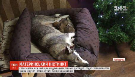 На Львівщині собака, яку торік знайшли з відрубаними чотирма лапами, прихистила двох цуценят