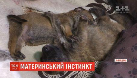 Мамою стала собака Майя, яку знайшли з відрубаними лапами на Львівщині