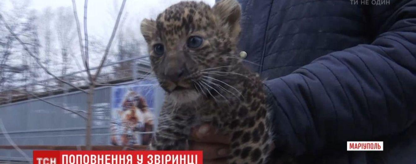 У Маріупольському зоопарку уперше показали новонароджених леопарденят
