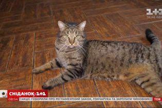 Став напарником психотерапевта: історія кота Тімохи