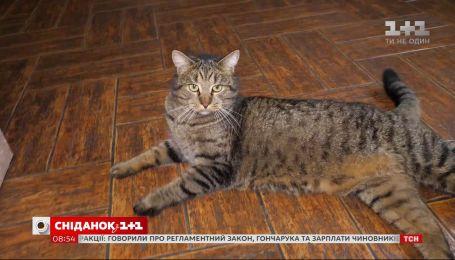 Стал напарником психотерапевта: история кота Тимоха