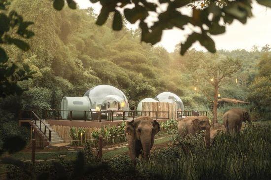 У Таїланді туристам пропонують зупинитися в готелі зі слонами