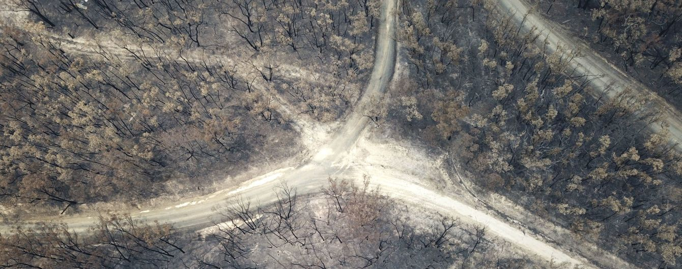 В Австралии после масштабных лесных пожаров начались дожди