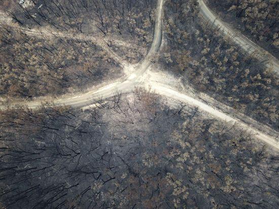 В Австралії після масштабних лісових пожеж почалися дощі