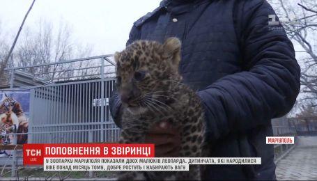 Посетителям зоопарка Мариуполя впервые показали двух малышей леопарда