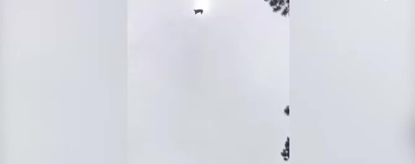 В Уругвае сняли падение свиньи с вертолета прямо в бассейн частного дома