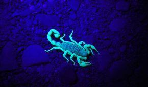 Учені з'ясували, яка тварина першою вийшла з води на сушу