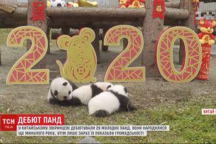 У Китаї дебютували 20 маленьких панд