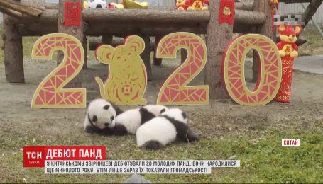 В Китае дебютировали 20 маленьких панд