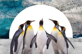 Невероятные факты о пингвинах