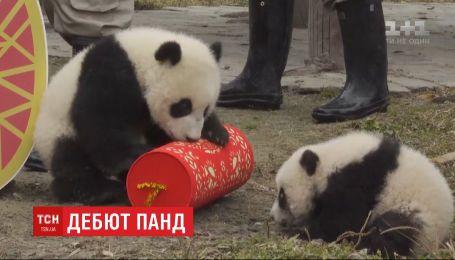 У китайському звіринці показали 20 маленьких панд