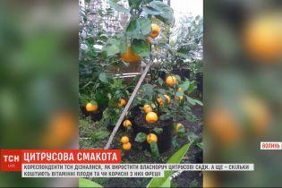 ТСН узнавала, как вырастить своими руками цитрусовые сады