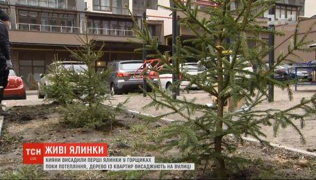 Киевляне высадили во дворе елки, которые в горшках украшали квартиры на новогодние праздники