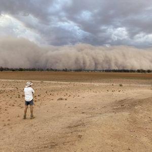 После сокрушительных пожаров и сильных дождей в Австралии начались пыльные бури