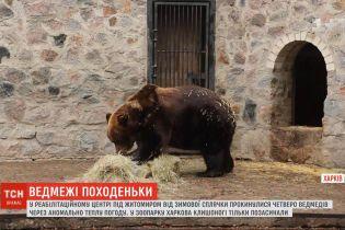 Под Житомиром из-за теплой погоды от зимней спячки проснулись медведи