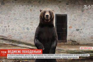 Через теплу погоду від зимової сплячки прокинулися ведмеді на Житомирщині