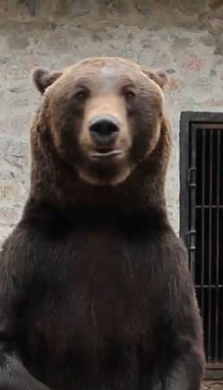 Из-за теплой погоды от зимней спячки проснулись медведи на Житомирщине