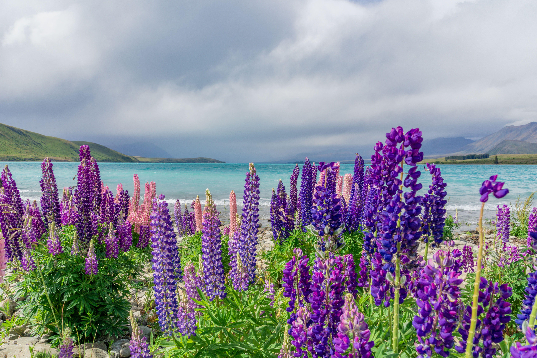 Нова Зеландія, для блогів_10