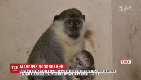 В частном зверинце Виннице зеленая обезьяна по имени Машка родила первенца